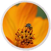 Bee On Cosmo Round Beach Towel