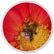 Bee On Dahlia - 2 Round Beach Towel