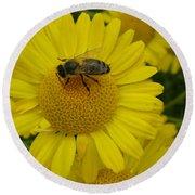 Bee On Daisy Round Beach Towel