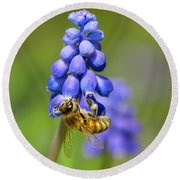 Bee On Grape Hyacinth Round Beach Towel