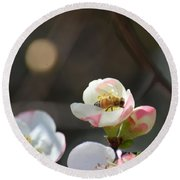 Bee On Japanese Quince Round Beach Towel