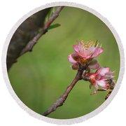 Bee On Peach Bloom Round Beach Towel
