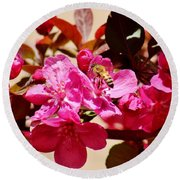 Bee On Pink Blossoms 031015aa Round Beach Towel