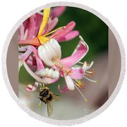 Bee On Pink Honeysuckle Round Beach Towel