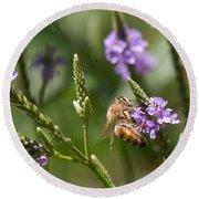 Bee On Purple Loosestrife  Round Beach Towel
