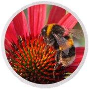 Bee On Red Coneflower 2 Round Beach Towel