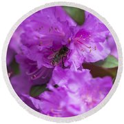 Bee On Rhododendrons Round Beach Towel
