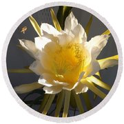 Bee Pollinating Dragon Fruit Blossom Round Beach Towel