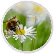 Bee The Daisy Round Beach Towel