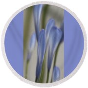 Before - Lily Of The Nile Round Beach Towel