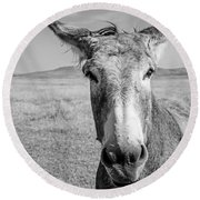 Begging Burro Round Beach Towel