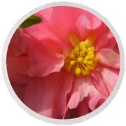 Begonia Named Nonstop Pink Round Beach Towel
