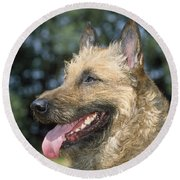 Belgian Laekenois Dog Round Beach Towel