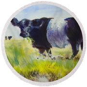 Belted Galloway Cow Round Beach Towel