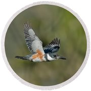 Belted Kigfisher Female Flying Round Beach Towel