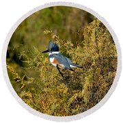 Belted Kingfisher Female Round Beach Towel