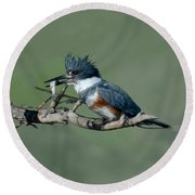 Belted Kingfisher Hen With Fish Round Beach Towel