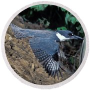 Belted Kingfisher Leaving Nest Round Beach Towel