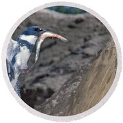 Belted Kingfisher With Prey Round Beach Towel