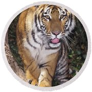 Bengal Tiger By Tree Endangered Species Wildlife Rescue Round Beach Towel