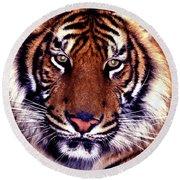 Bengal Tiger Eye To Eye Round Beach Towel