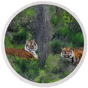 Bengal Tigers On Grassy Hillside Endangered Species Wildlife Rescue Round Beach Towel