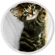 Benny The Kitten Playing Round Beach Towel