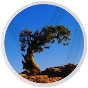 Bent By The Wind Round Beach Towel