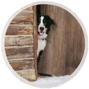 Bernese Mountain Dog At Log Cabin Door Round Beach Towel