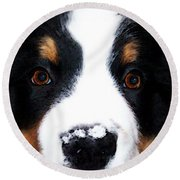 Bernese Mountain Dog - Baby It's Cold Outside Round Beach Towel