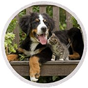 Bernese Mountain Puppy & Kitten Round Beach Towel