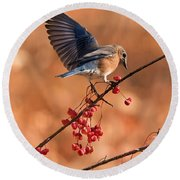 Berry Picking Bluebird Round Beach Towel