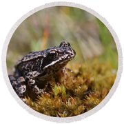 Beutiful Frog On The Moss Round Beach Towel