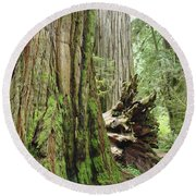 Big California Redwood Tree Forest Art Prints Round Beach Towel