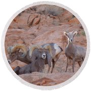 Big Horn Group Pose Round Beach Towel