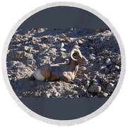Big Horn Sheep Close Up Round Beach Towel