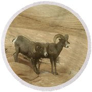 Big Horn Sheep Round Beach Towel