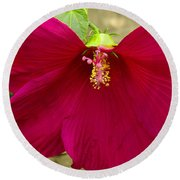 Big Red Hibiscus Bloom Round Beach Towel
