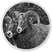 Bighorn Brothers In Grey Colorized Round Beach Towel