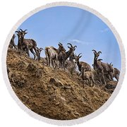 Bighorn Sheep At Blue Mesa Reservoir Round Beach Towel