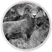 Bighorn Sheep Mountain Round Beach Towel
