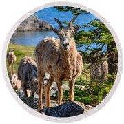 Bighorn Sheep Of Lake Minnewanka Round Beach Towel