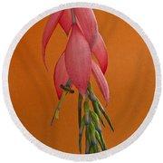 Bilbergia  Windii Blossom Round Beach Towel by Heiko Koehrer-Wagner
