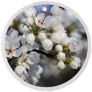 Billows Of Fluffy White Bradford Pear Blossoms Round Beach Towel