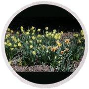 Biltmore Daffodils Round Beach Towel