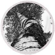 Birch Tree Round Beach Towel