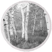 Birch Trees In A Forest, Acadia Round Beach Towel