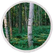 Birch Trees In A Forest Round Beach Towel