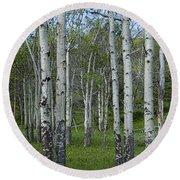 Birch Trees In A Grove No. 0148 Round Beach Towel