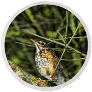 Bird - Baby Robin Round Beach Towel by Paul Ward